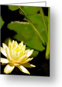 Warm Looking Flower Greeting Cards - Float Of Elegance  Greeting Card by Debra     Vatalaro