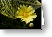 Huisken Greeting Cards - Floating Daisy Greeting Card by Lyle  Huisken