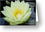 Lily Pad Greeting Cards Greeting Cards - Floating Flower Greeting Card by Chad and Stacey Hall