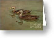 Mallards Greeting Cards - Floating On By Greeting Card by Deborah Benoit