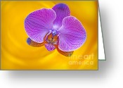 Greenhouse Greeting Cards - Floating Orchid Greeting Card by Susan Candelario