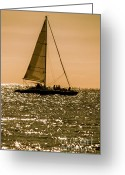 Sailing Cat Greeting Cards - Floating Party Greeting Card by Rene Triay Photography