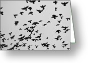 Large Group Of Animals Greeting Cards - Flock Of Flying Pigeons Greeting Card by Photography by Ellen L. Soohoo
