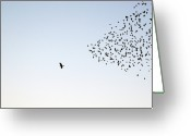 Standing Out From The Crowd Greeting Cards - Flock Of Sturnus Vulgaris Flying Greeting Card by FotoFalk