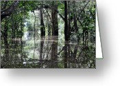 Flood Greeting Cards - Flooded Amazon Rainforest Greeting Card by Oliver J Davis Photography