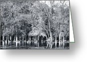 Flooded Greeting Cards - Flooded Park Greeting Card by John Rizzuto