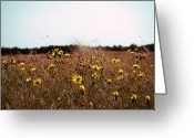 Wildflower Photography Greeting Cards - Flora Greeting Card by Photography by Daniel Hans Peter Christensen
