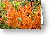 Seasons Framed Prints Prints Greeting Cards - Floral art prints Orange Rhodies Flowers Greeting Card by Baslee Troutman Photography Art Prints