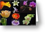 Flower Over Black Photo Greeting Cards - Floral Beauties over Black Greeting Card by Juergen Roth