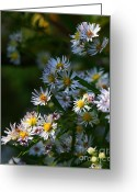 Wildflower Fine Art Greeting Cards - Floral Bunch  Greeting Card by Neal  Eslinger