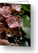 Flower Photography Greeting Cards - Floral Cycle  Greeting Card by Neal  Eslinger