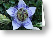 Cocoons Greeting Cards - Floral Passion Greeting Card by Eric Kempson