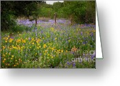 Blue Bonnets Greeting Cards - Floral Pasture No. 2 Greeting Card by Jon Holiday