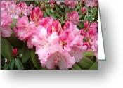 Seasons Framed Prints Prints Greeting Cards - Floral Rhodies Photography Pink Rhododendrons prints Greeting Card by Baslee Troutman Photography Art Prints