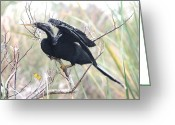 Florida Pyrography Greeting Cards - Florida Anhinga Greeting Card by Valia Bradshaw