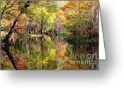 Autumn Colors Greeting Cards - Florida Autumn Secret Greeting Card by Carol Groenen