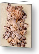Shells Mixed Media Greeting Cards - Florida Opus 05 Greeting Card by Carol Zee