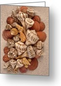 Shells Mixed Media Greeting Cards - Florida Opus 09 Greeting Card by Carol Zee