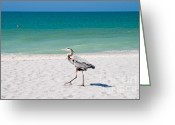 Surf Lifestyle Greeting Cards - Florida Sanibel Island Summer Vacation Beach Wildlife Greeting Card by ELITE IMAGE photography By Chad McDermott