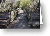 Passageways Greeting Cards - Florida Swamp Boardwalk Greeting Card by Carol Groenen