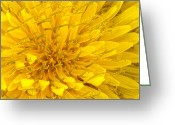 Spring Scenes Greeting Cards - Flower - Dandelion Greeting Card by Mike Savad
