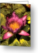 Lily Pad Greeting Cards - Flower - Lotus - The lotus blossom  Greeting Card by Mike Savad