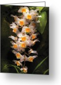 Dendrobium Greeting Cards - Flower - Orchid - Dendrobium Orchid Greeting Card by Mike Savad