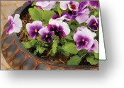 Florist Greeting Cards - Flower - Pansy - Purple Pansies Greeting Card by Mike Savad