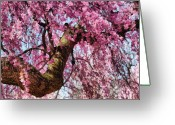 You Greeting Cards - Flower - Sakura - Finally its Spring Greeting Card by Mike Savad
