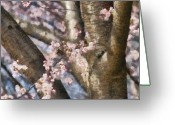 You Greeting Cards - Flower - Sakura - Spring Blossom Greeting Card by Mike Savad