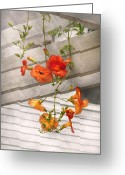 Spring Scenes Greeting Cards - Flower - Trumpet melodies Greeting Card by Mike Savad