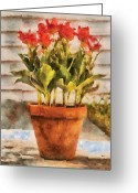 You Greeting Cards - Flower - Tulip - A pot of Tulips II Greeting Card by Mike Savad