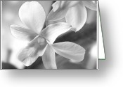 White Flower Greeting Cards - Flower 2 Greeting Card by Mike McGlothlen