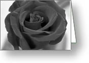 White Digital Art Greeting Cards - Flower 4 Greeting Card by Mike McGlothlen