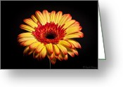 Alhaji Samura Greeting Cards - Flower Greeting Card by Alhaji Samura