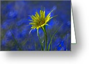 Flowers. Floral Greeting Cards - Flower and Flax Greeting Card by Heather Coen