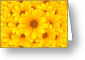 Pollen Greeting Cards - Flower background Greeting Card by Carlos Caetano