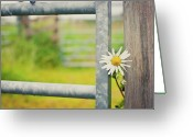 Fence Greeting Cards - Flower Between Fence And Wood Greeting Card by Enjoy it!