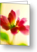 Plants Greeting Cards Greeting Cards - Flower Greeting Card by Ciprian Dudas