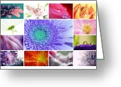 Daisies Photos Greeting Cards - Flower Collage 3 Greeting Card by Kristin Kreet