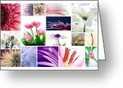 Daisies Photos Greeting Cards - Flower Collage Greeting Card by Kristin Kreet