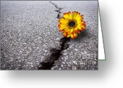 Grow Greeting Cards - Flower in asphalt Greeting Card by Carlos Caetano