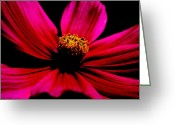 Flower Greeting Card Greeting Cards - Flower in Red Greeting Card by Tam Graff