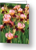 Gardeners Greeting Cards - Flower - Iris - GY Morrison Greeting Card by Mike Savad