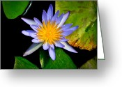 Water Lilly Greeting Cards - Flower Lilly and Water Greeting Card by Steve McKinzie