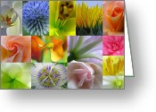 Flower Over Black Photo Greeting Cards - Flower Macro Photography Greeting Card by Juergen Roth