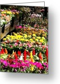 Vinca Flowers Greeting Cards - Flower Market Greeting Card by Elizabeth Coats