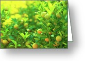 Tangerines Greeting Cards - Flower Market Greeting Card by MotHaiBaPhoto Prints