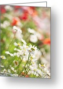 Summer Garden Greeting Cards - Flower meadow Greeting Card by Elena Elisseeva