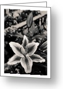 Bw Pyrography Greeting Cards - Flower Greeting Card by Miles Schuster